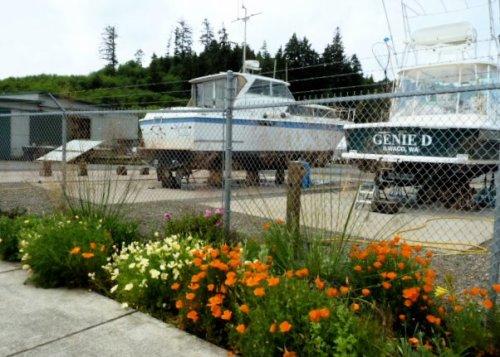 2 June, California poppies at the boatyard