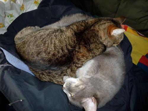 Mary and Smokey snooze again