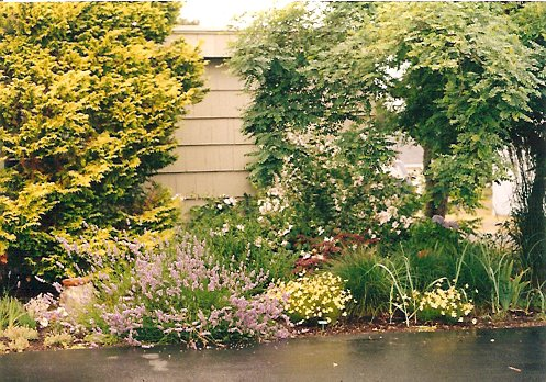 Anchorage garden, summer '99