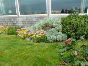 Artemisia 'Powis Castle' and Sedum 'Autumn Joy'