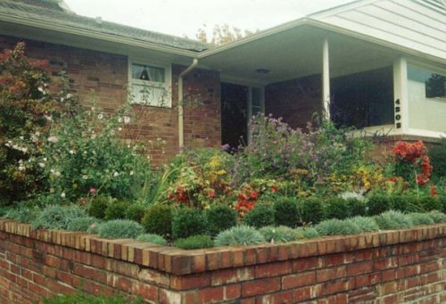 autumn '96 with Lavatera and chrysanthemums
