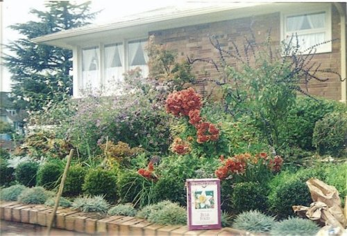 Jane's garden in autumn with a late blooming Salvia and mums