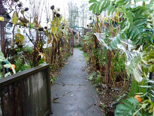 Avenue of Dead Plants, 30 October