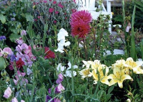 lilies, dahlias, sweet peas