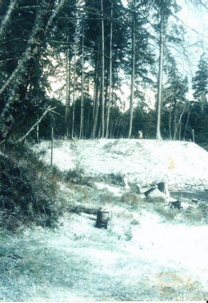 back yard, Jan. '95