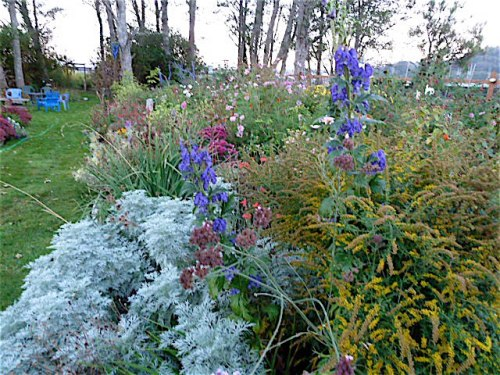 back garden, 8 October