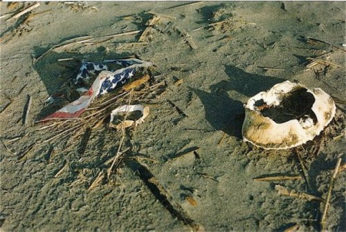 beachcombing: trash and treasures