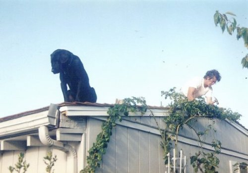 Bertie on Peggy's garage roof