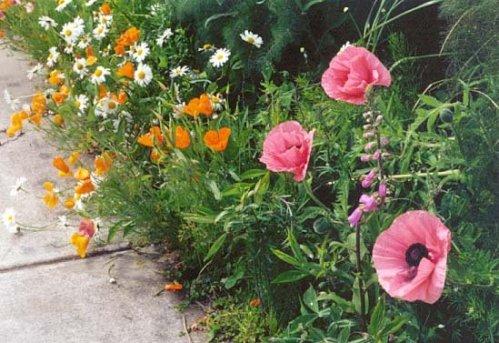 boatyard garden, 2000