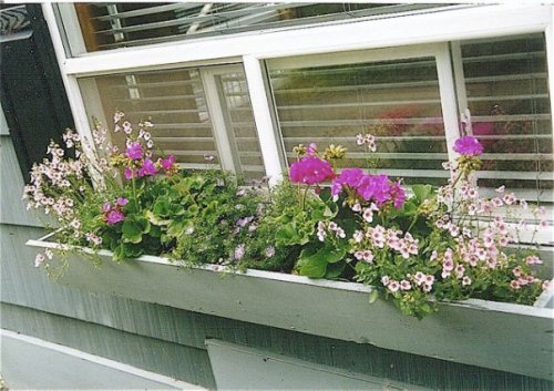 office windowbox at KBC, '98