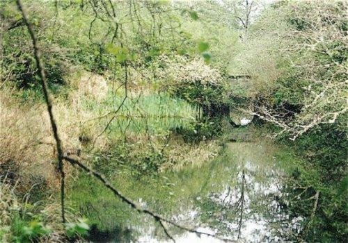 the stream by Shakti Cove
