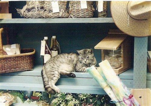 cat at Village Green
