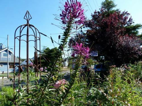 Cleome, 5 Sept; an annual
