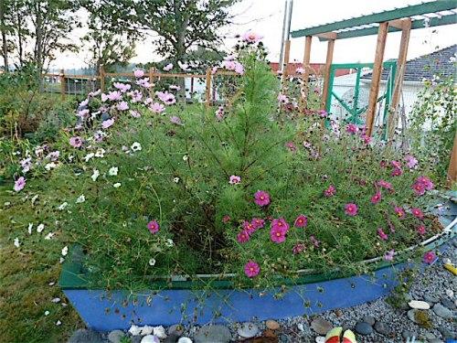 garden boat, 8 October