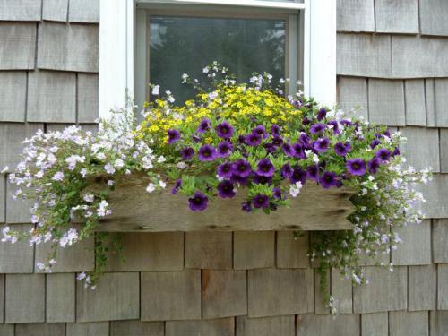 cottage windowbox
