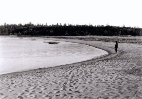 the curve of Willapa Bay at Leadbetter Point