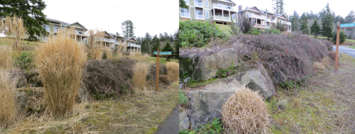 T-Junction garden looking south, before and after