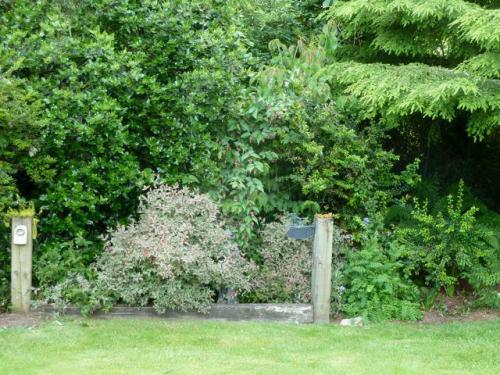 dog memorial garden (Misty, Debbie, Raven)
