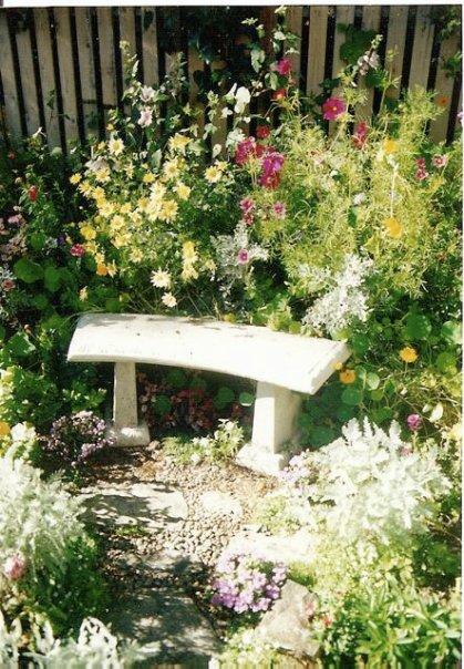 in Donna's garden