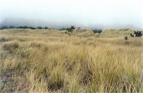 the Seaview dunes, pristine and undeveloped