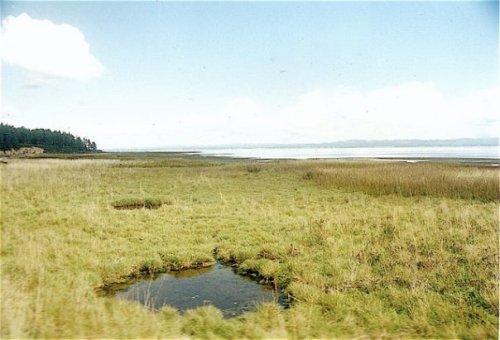 Water collected in the Seaview dunes wetlands.