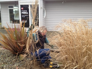 Allan cutting ornamental grass down at the Powell Gallery.