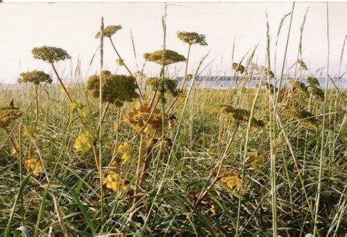 Leadbetter wild flowers
