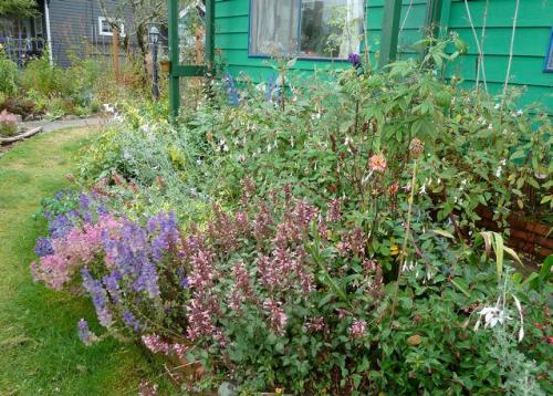 front garden, 14 Sept