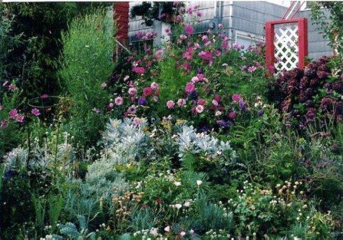 front garden in summer