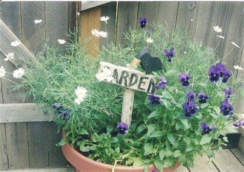 in Jo's garden