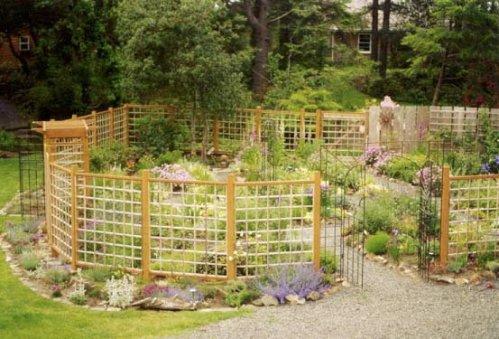 fenced garden, first summer