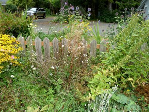 Front garden bed has choice perennials like Echinops (blue globe thistle)