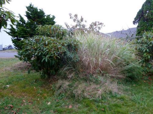 grass and rhodo