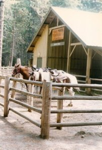 horse rentals