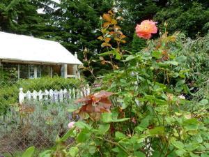 flower garden above the house