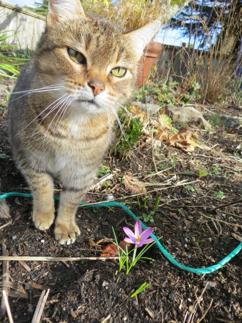 Mary and the first crocus