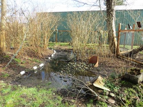 rainwater in the bogsy wood swale