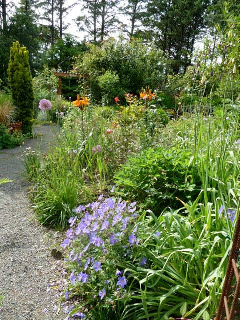 in the fenced garden