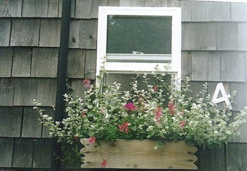 cottage windowbox at KBC