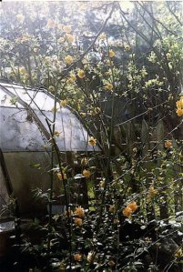 Kerria japonica by the greenhouse