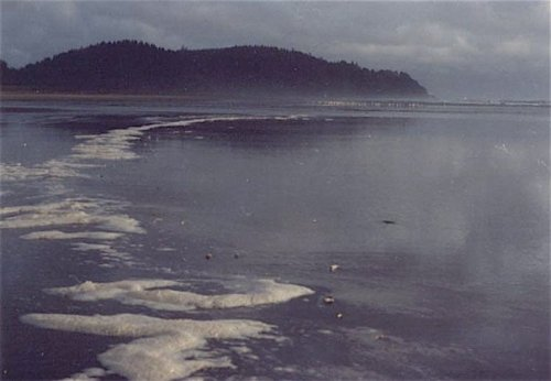Thanskgiving weekend: low tide with foam