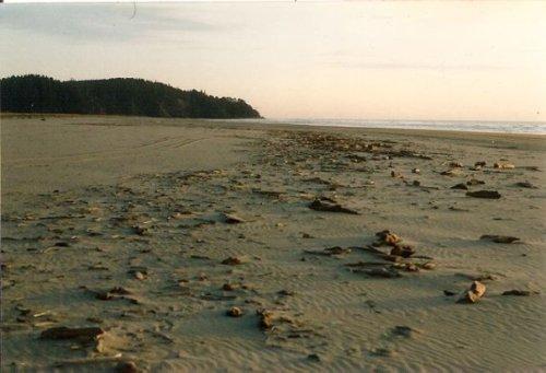low tide beachcombing