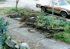 3-88, new garden space