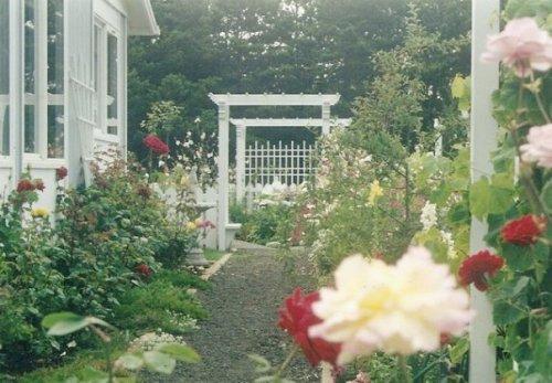Maxine's west side garden