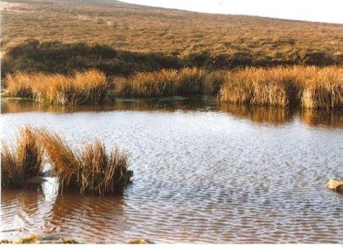 moor wetlands