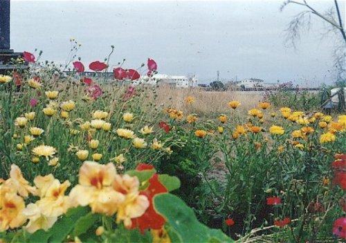Nahcotta garden