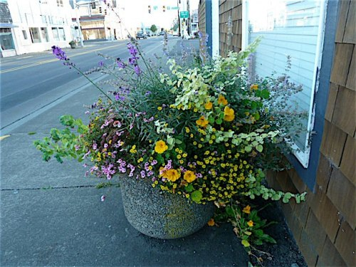 same planter on 10th October