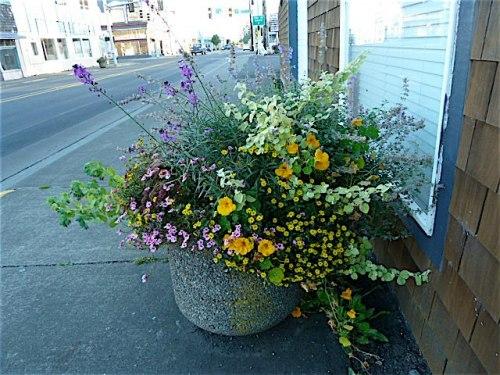 same planter on 10th October