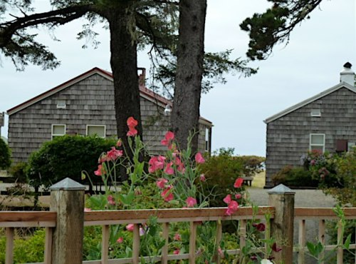 sweet peas and cottages