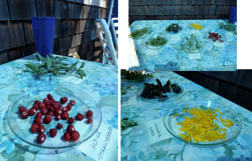 on the deck, a nice way to display different edible leaves and berries